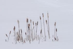 Winter Meditation $375